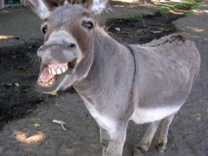 Encaminhamos via Fedex o troféu Asno Volante (no caso, um burro vivo e saudável) para o vencedor